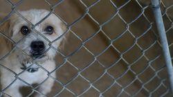 10 sugestões sobre proteção animal para as agendas de Aécio e