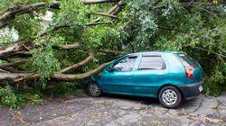 Chuva forte: SP contabiliza mais de 130 árvores caídas. Cantareira fica estável em