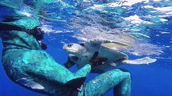 ASSISTA: mergulhador salva tartaruga marinha e recebe agradecimento