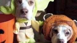 De Yoda a Mario: Beagles mostram como arrasar no dia das
