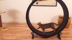 Gatos gordos? Não mais! Empresa lança roda de exercícios para