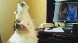 Cães são surpreendidos por seus donos no