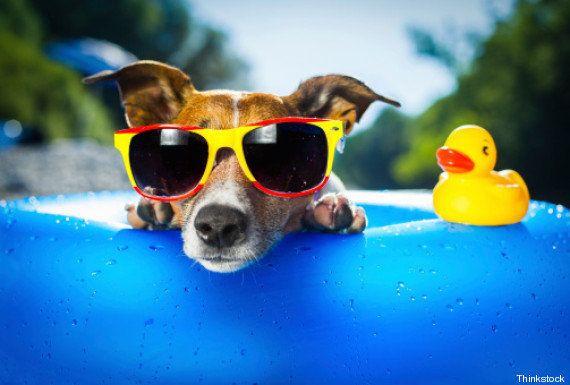 Dez coisas que os cachorros ensinam sobre o que realmente