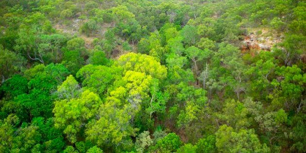 Closed monsoon thicket, in perennial spring gully. Wongalara Station Reserve, southeast Arnhem Land,...
