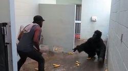 ASSISTA: Socorro! Gorila invade banheiro em pegadinha