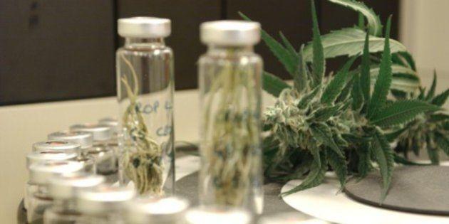 CCJ do Senado aprova importação de maconha medicinal para o Brasil e estabelece critério de porte de...
