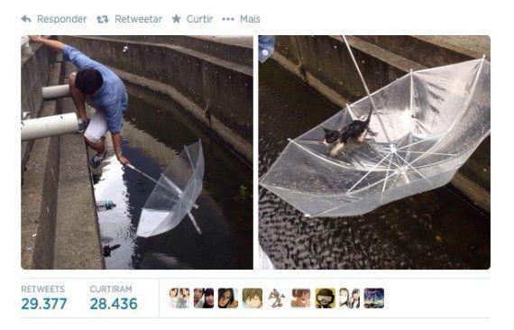 Filhote de gato é salvo de afogamento com guarda-chuva