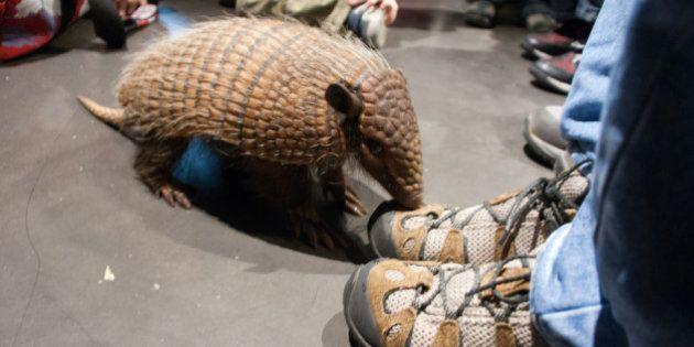 Copa do Mundo: petição online quer aproveitar a imagem de Fuleco para criação do Parque Nacional do