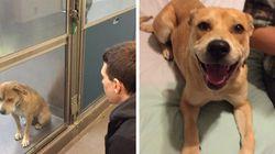 FOTOS: a transição do cachorro mais triste de todos os tempos em um poço de