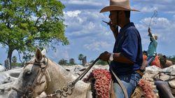 Agropecuária brasileira mais competitiva na nova economia de baixo