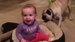ASSISTA: Este cachorro não quer dividir a cama com o bebê.