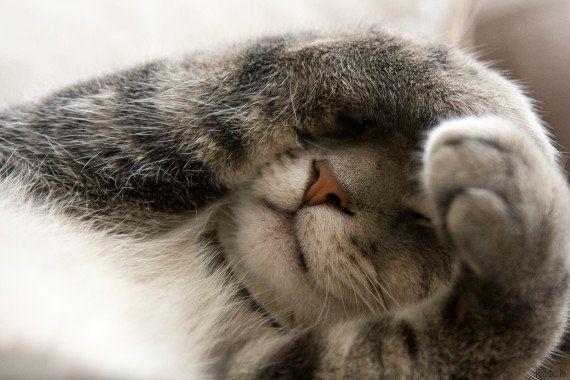 11 razões pelas quais sua obsessão com gatos te faz mais feliz e mais