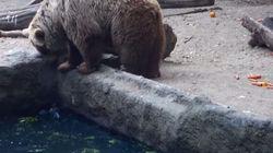 ASSISTA: urso salva corvo da morte em zoológico da