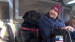 ASSISTA: Este cachorro pega busão sozinho e não está nem