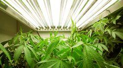 O New York Times deu mais um passo em direção à legalização da maconha nos
