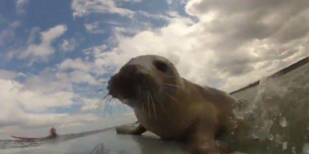 Um surfista inglês ganha a companhia de uma foca no Reino Unido