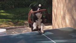 ASSISTA: Este cachorro é melhor do que MUITA gente no tênis de