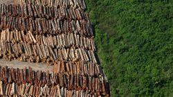 Os dados do desmatamento na Amazônia estão aqui. E não são boas