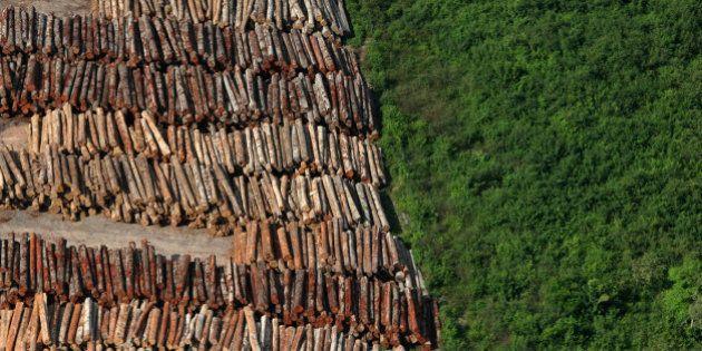 Desmatamento na Amazônia aumenta 122% em agosto e setembro em relação ao mesmo período em