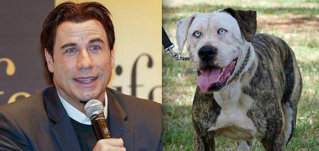Cara de um, focinho de outro: conheça cães que transformam 'Tempos de Violência' em 'tempos de