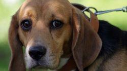 Testes de cosméticos em animais: projeto ainda tem