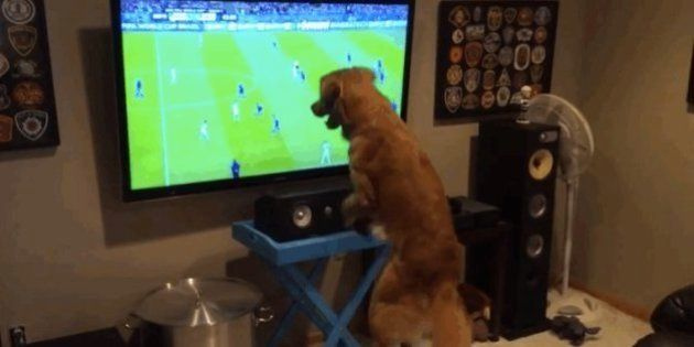 Copa 2014: cachorros realmente entusiasmados com os jogos