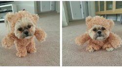 Este cachorro vestido de pelúcia é a nova fofura irresistível da