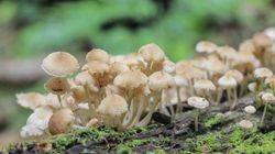 O que acontece no cérebro de quem 'viaja no cogumelo