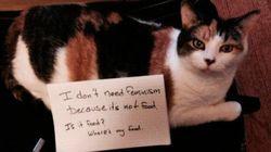 FOTOS: Gatos 'confusos' mostram que são totalmente contra o