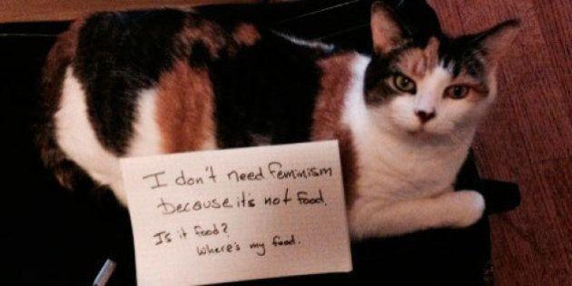 Tumblr 'Gatos Confusos Contra o Feminismo' era só o que a internet precisava