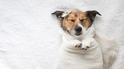 Fotógrafa troca bebê por cachorro em ensaio com os clichês das fotos de
