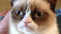 Famosos na web, gatos ganham festivais de vídeo no mundo