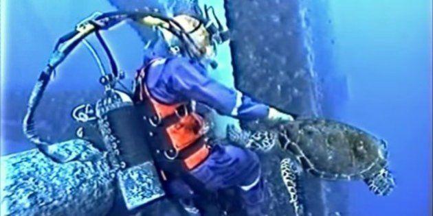 Tartaruga surpreende mergulhador comercial durante trabalho