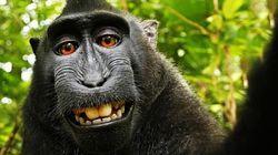 Cada macaco na sua