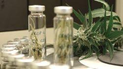 O uso medicinal do canabidiol está prestes a ser autorizado no