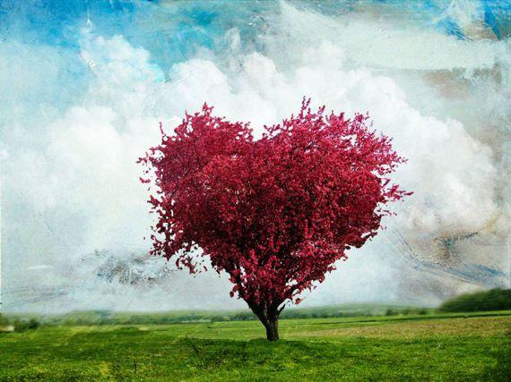 A dor (amor) é uma flor que