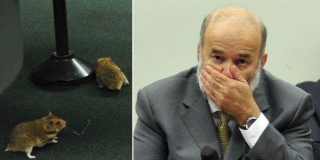 Bate-boca e ratos marcam depoimento do tesoureiro do PT, João Vaccari Neto, na CPI da
