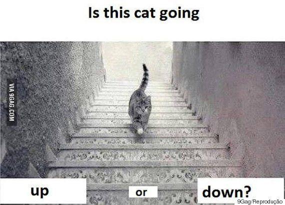 A internet tem uma GRANDE dúvida hoje: Este gato está descendo ou subindo as
