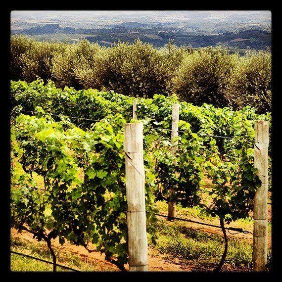 O vinho da terra do