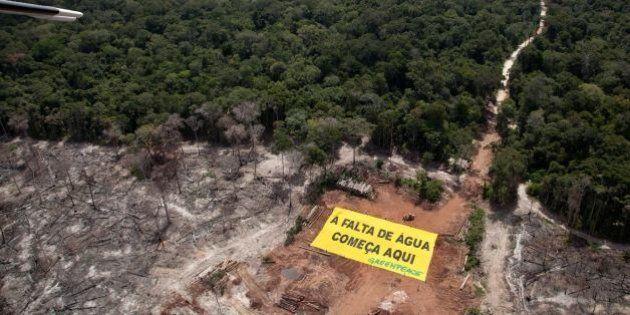 Ativistas do Greenpeace protestam no sul de Roraima contra desmatamento excessivo da