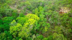 CO2 no Brasil: governo aponta redução recorde entre 2005 e