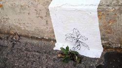 Artista encontra 1,5 mil plantas que vivem no concreto do