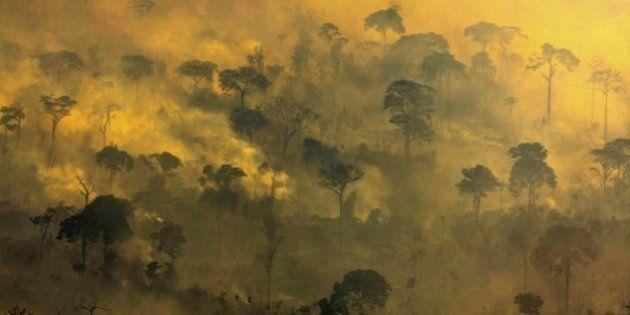 Desmatamento avança 467% na Amazônia em outubro, afirma