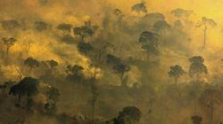 Números não oficiais indicam que desmatamento dispara na