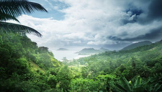 INFOGRÁFICO: 50 motivos porque as florestas tropicais são