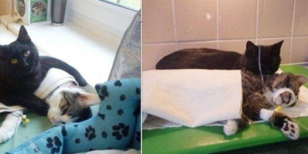 Gato vira 'enfermeiro' em hospital veterinário na Polônia