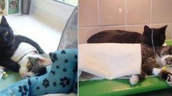 Gato vira 'enfermeiro' em abrigo para animais na
