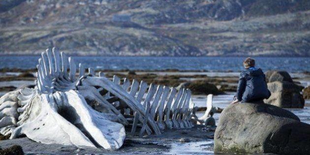 5 motivos para você assistir a Leviatã, o filme que está colocando a Rússia de cabeça para