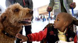 Chave do afeto entre cães e humanos está na troca de