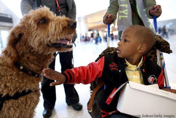 Troca de olhares é a chave do afeto entre cães e humanos, diz